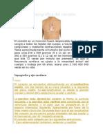 Anatomía Topográfica Del Corazón