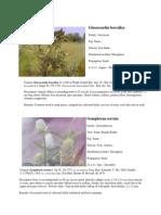 InvasivePlantsOfIndia-2