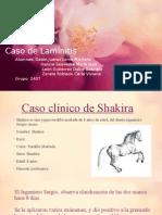 Laminitis en equinos Imagenología
