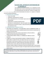 Patologia Del Aparato Extensor de La Rodilla