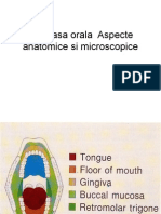 Mucoasa Orala Aspecte Anatomice Si Microscopice