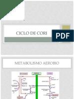 Ciclo de Cori2