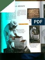 calendrier apiculture