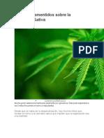 5 Mitos Desmentidos Sobre La Cannabis Sativa_618