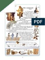 2 pag 24 - 29 rom.pdf