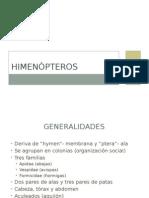 HIMENÒPTEROS
