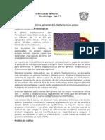 staphylococcus.docx