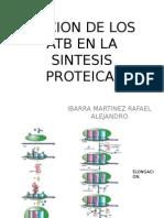 Accion de Los Atb en La Sintesis Proteica