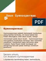Daun Gymnospermae