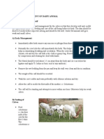 Care and Management of Newly Born Calf.docx