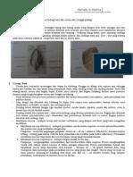 Anatomi Hidung Dan Fisiologi Penciuman