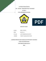 laporan daslintan efri