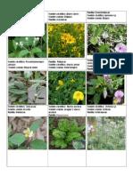 Plantas anolaima3