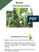 Banana - Cultivares e Praticas de Cultivo