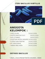 Bakteri Bacillus Subtillis