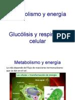 Metabolismo_y_energi_a-1.pdf