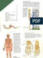 bộ xương