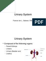 Urinary System mls