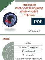 Anatomia Osteocartilaginosa Nariz y Fosas Nasales Naty