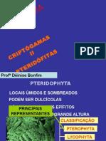 pteridofitas