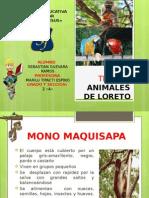 Animales ade Loreto