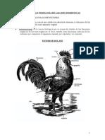 Fisiologia de Aves Completo