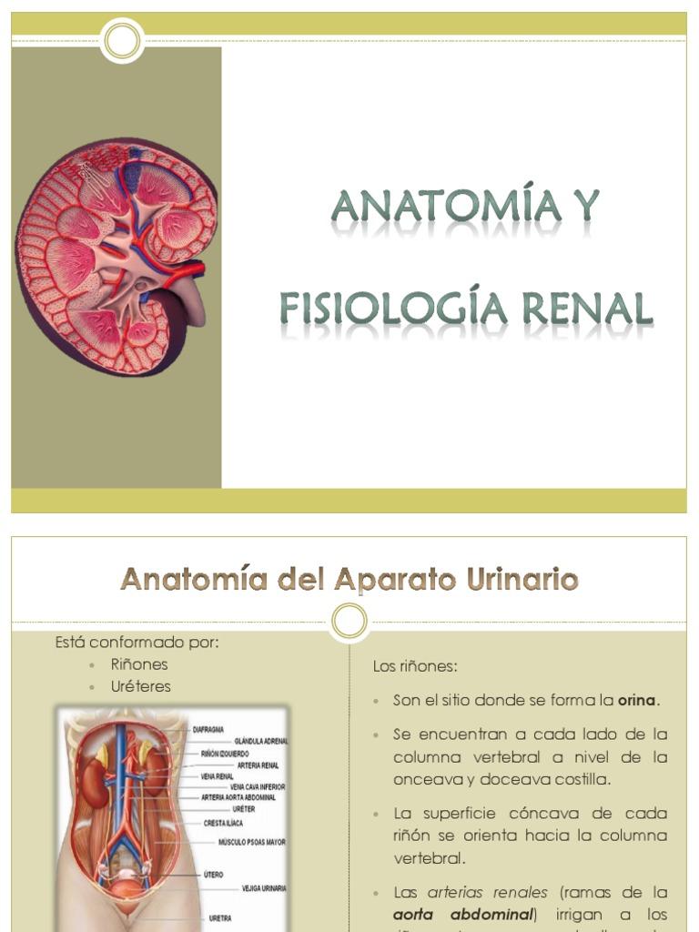 Fisiología Renal y Anatomia