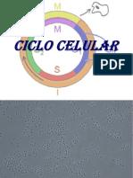Presentación Ciclo Celular