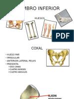 Coxal y Femur