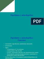 29. Hipotálamo y Adenohipofisis