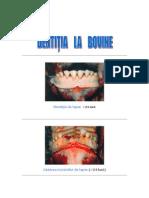 Determinarea Varstei-Dentitia Bovine