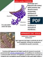 La Cellula b