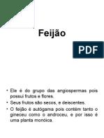 Morfologia do Feijão
