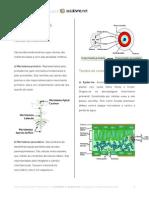 Apostila Histologia Vegetal I