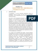 Ectoparásitos de Animales Domésticos