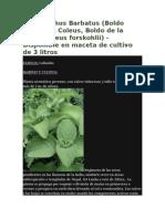 Plectranthus Barbatus.docx