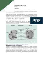 Anatomía y Fisiología Celular