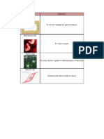 Type of cell.pdf
