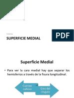 Superficie Medial (1)