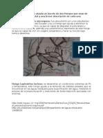 Fase 2 Exploratoria Microbilogia