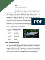 tinjauan pustaka Ikan Timah