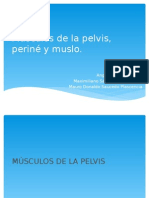 Músculos de La Pelvis, Periné y Muslo