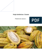 Hoja Botanica Cacao 2012