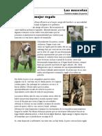 Un Perro El Mejor Regalo. w1