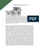 Sejarah Bangsa Lemuria Sebelum Bangsa Atlatis