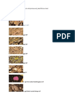 Olivine Optical Mineralogy Properties