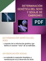 DETERMINACION GENETICA DEL SEXO Y SEXAJE DE EMBRIONES
