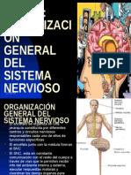 Tema 6. Organizacion General Del Sistema Nervioso