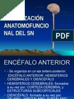 Tema 7. Organizacion Anatomofuncional Del Sistema Nervioso