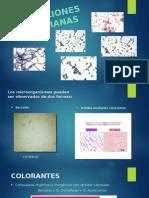 Coleraciones Microbianas Ultimo (2)